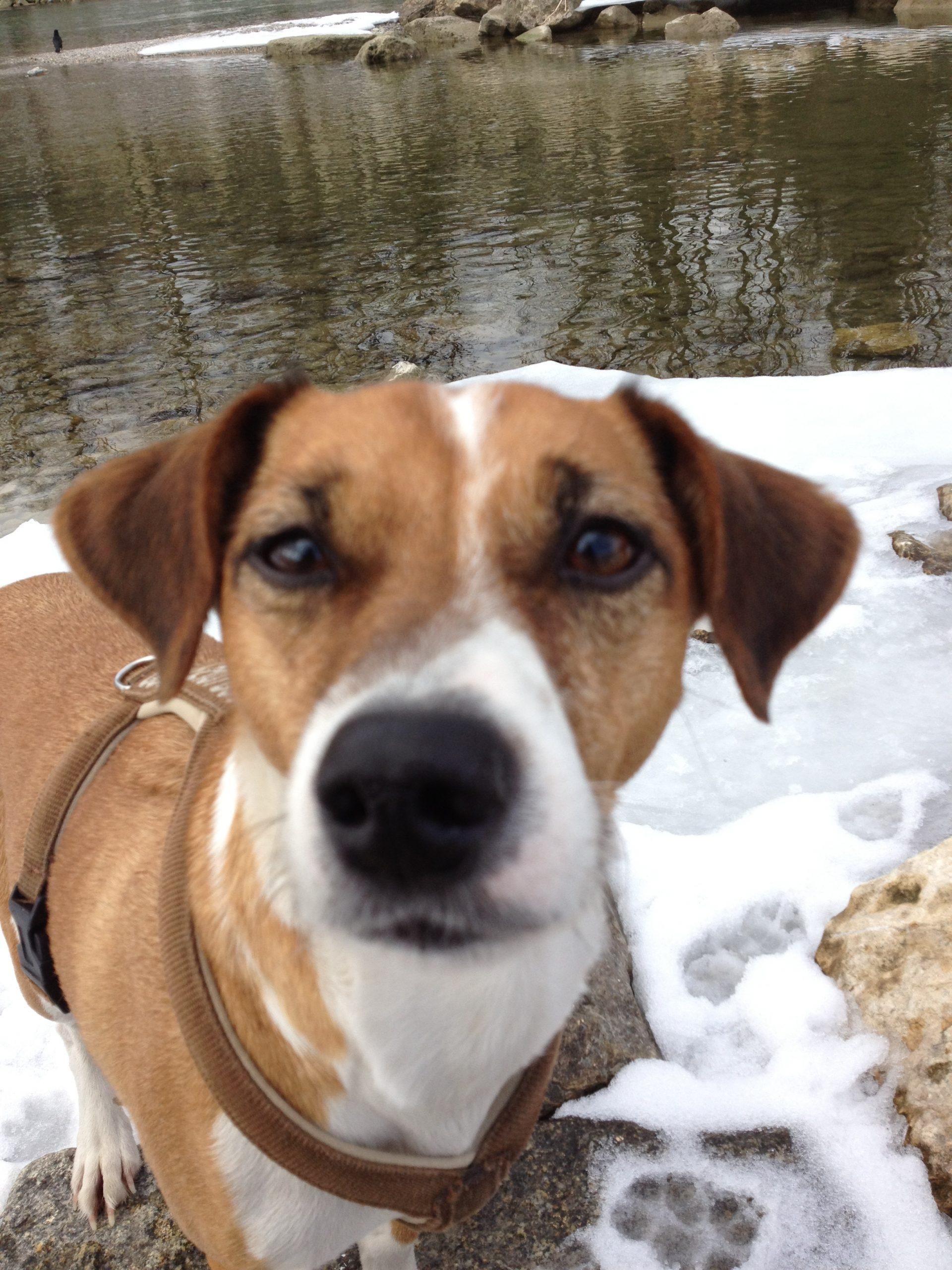 Hundebetreuung_Willie