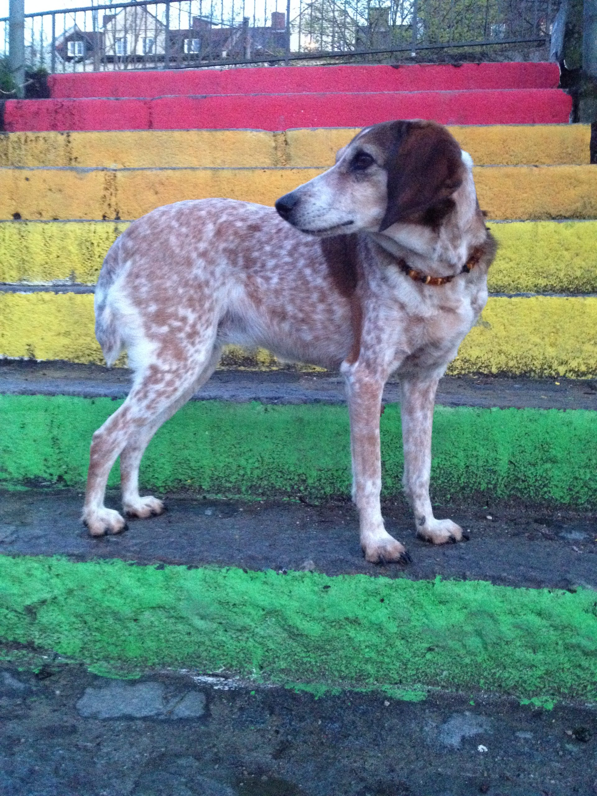 Hundebetreuung_Bia