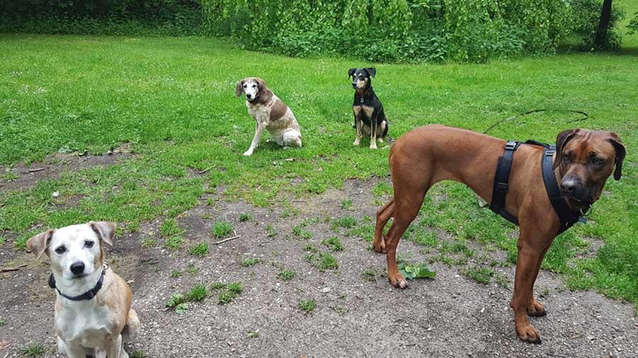 Hundebetreuung_Kl_Mai012