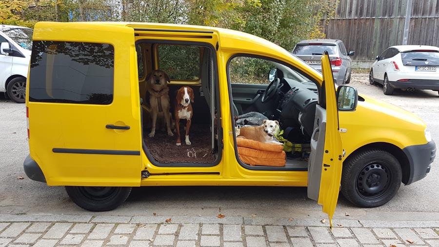 Hundegassi Transport