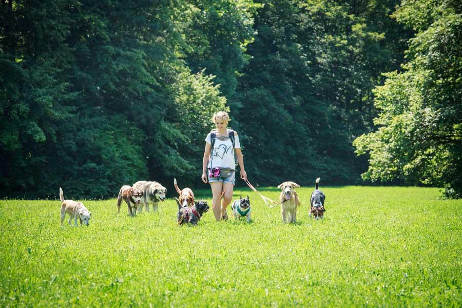 Hundegassi unterwegs